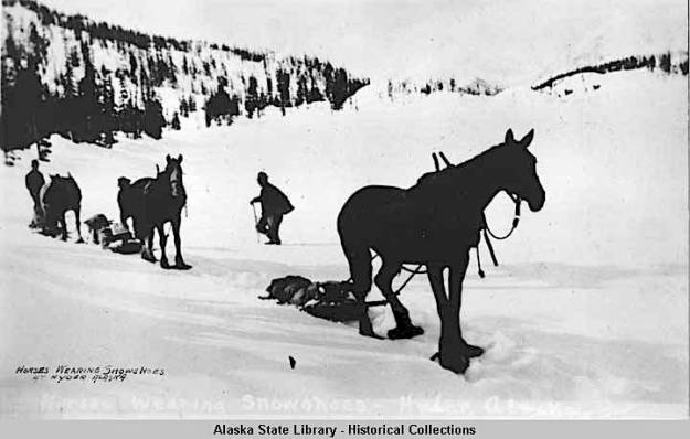 horse wearing snowshoes