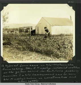 a_typical_farm_scene_in_the_matanuska_farm_colony__mrs_e_huseby_colonist_mother_in_the_garden_behind_her_tent_home_picking_turnips__in_the_background_can_be_seen_the_husebys_cabin_in_con2