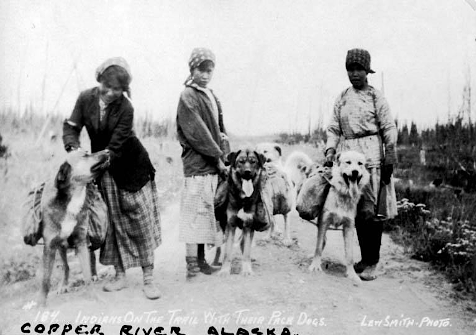 Copper River packdogs